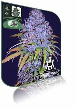 how to buy cannabis seeds online